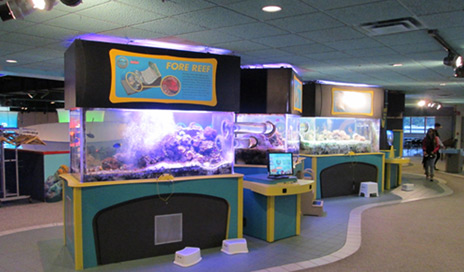 Aquarium Service Upper Saint Clair PA